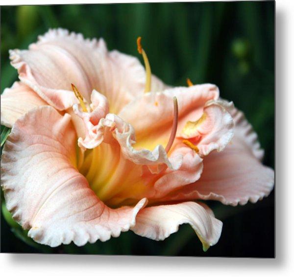 Peach Magnolia Love Affair  Metal Print