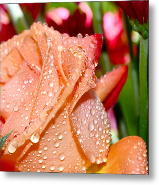 Peach Rose Metal Print by Michelle Armstrong