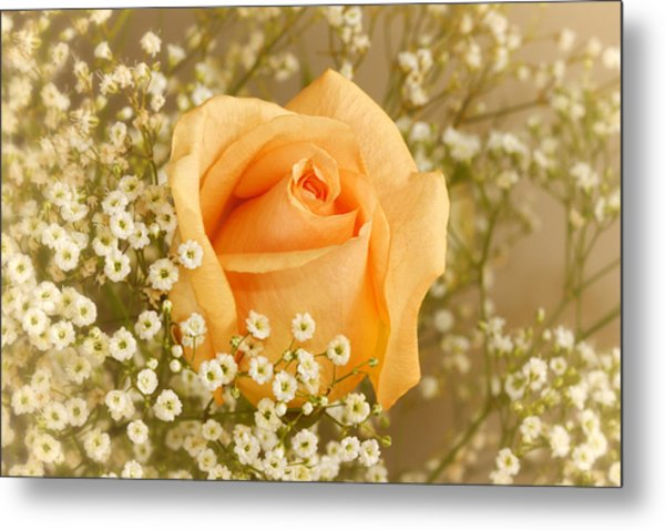 Peach Rose With Baby's Breath Metal Print