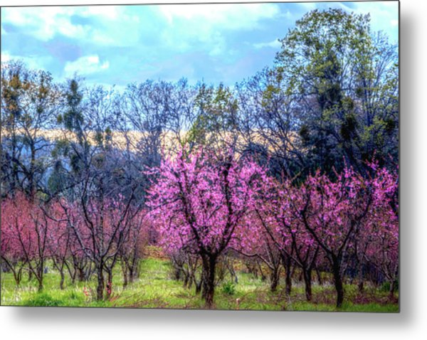 Metal Print featuring the photograph Peachy Blossum Scene2 by William Havle
