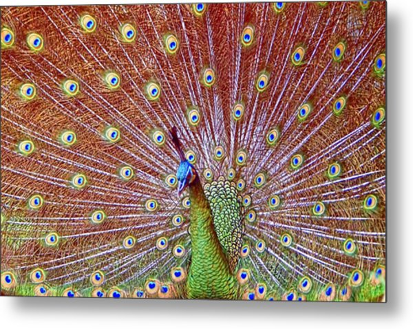 Peacock Bloom Metal Print