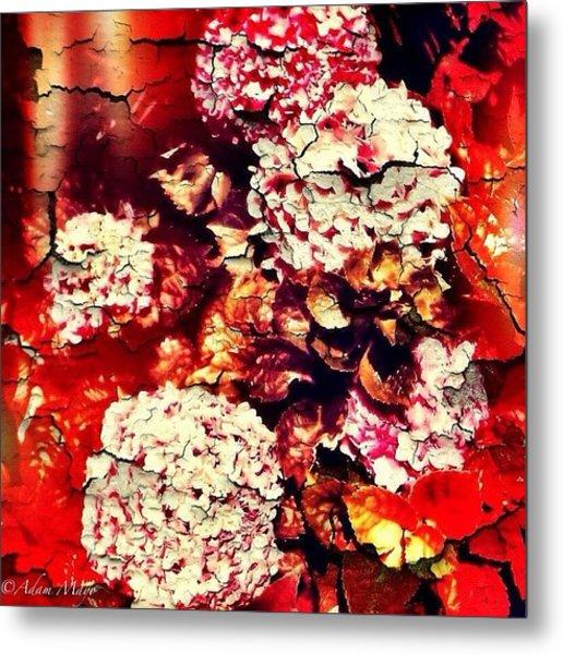 Peeling Hydrangeas - Ravine Gardens Metal Print