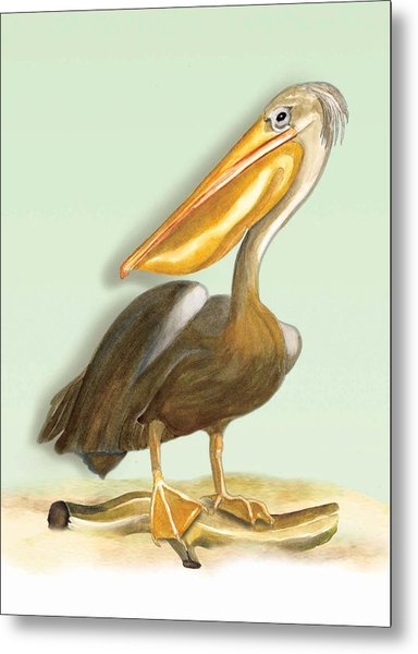Pelican Bill Metal Print