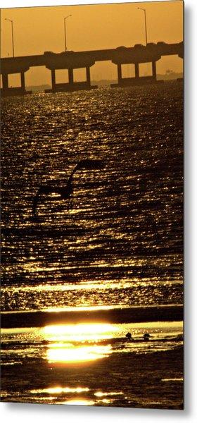 Pelican In Flight Golden Sun Metal Print by John Wright