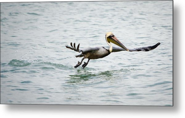Pelican Landing Metal Print by Mike Rivera