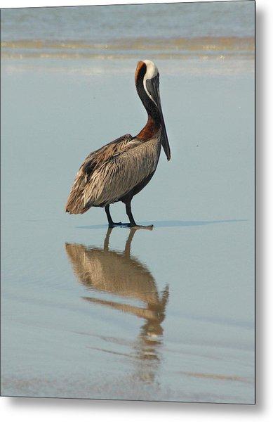 Pelican Reflections Metal Print