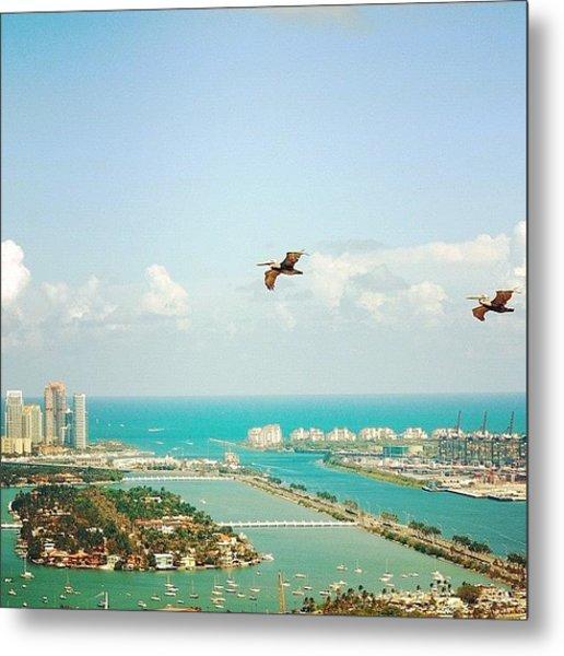 Pelicans Above Biscayne Bay Metal Print