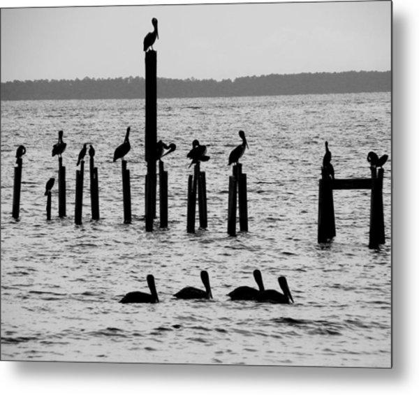 Pelicans On Posts Metal Print by Judy Wanamaker