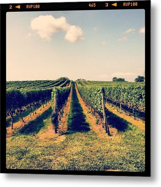 Pellegrini Vineyards, Cutchogue, Ny Metal Print
