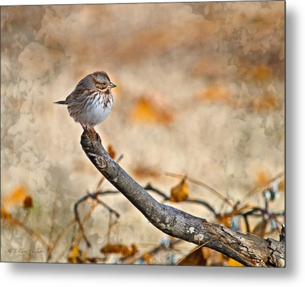 Perched High - Baby Sparrow Metal Print by J Larry Walker