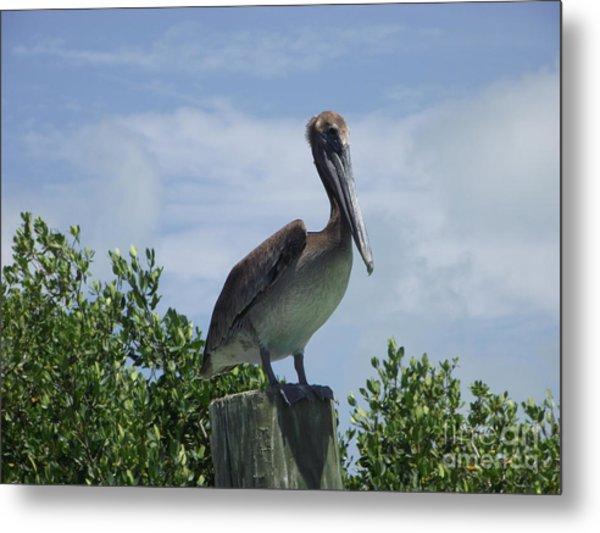Perched Pelican Metal Print