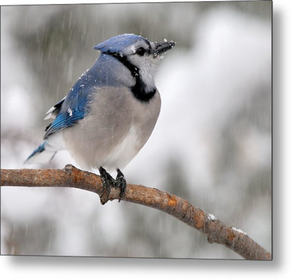 Perching Metal Print by Zannie B