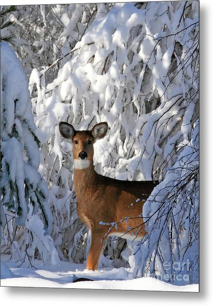 Perfect Pose Metal Print