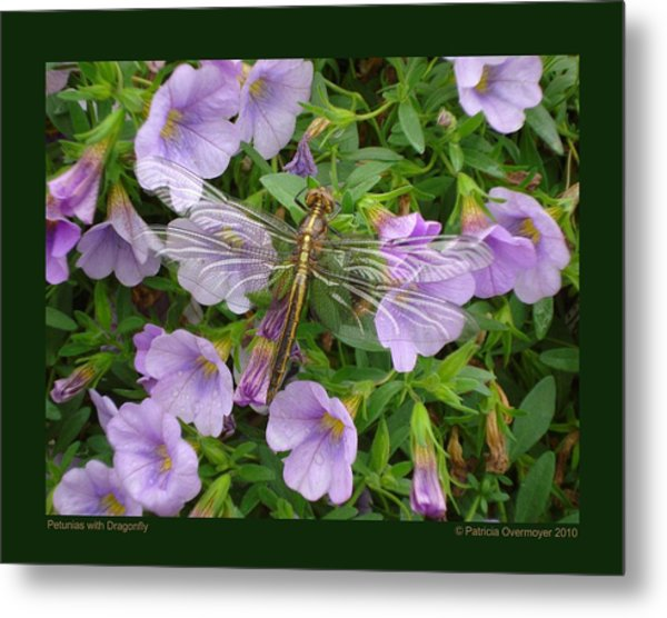 Petunias With Dragonfly Metal Print