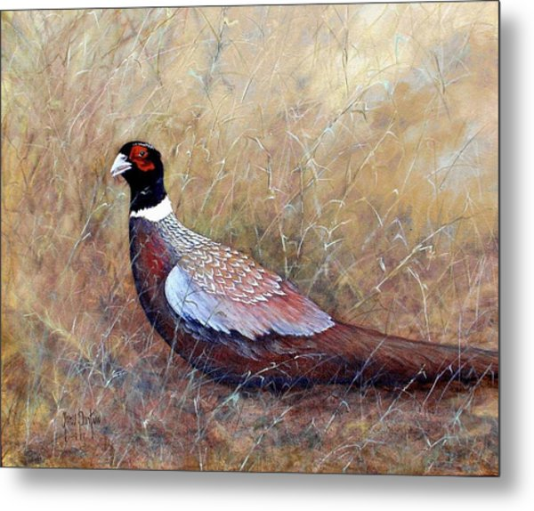 Pheasant In The Grass Metal Print