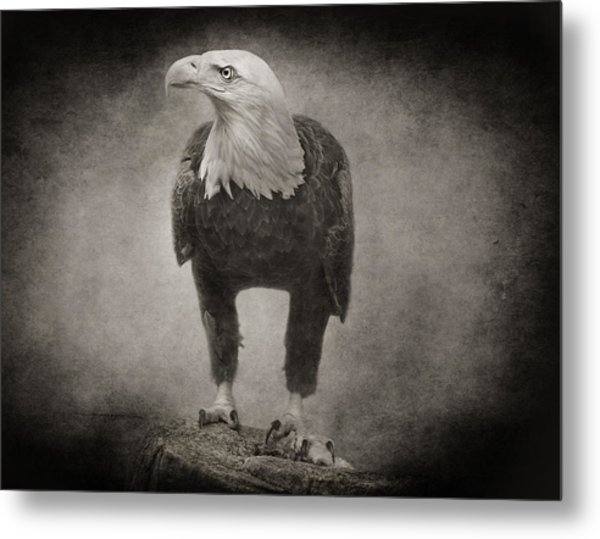 Philadelphia Eagle Metal Print