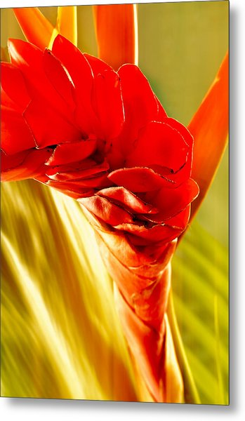 Photograph Of A Red Ginger Flower Metal Print