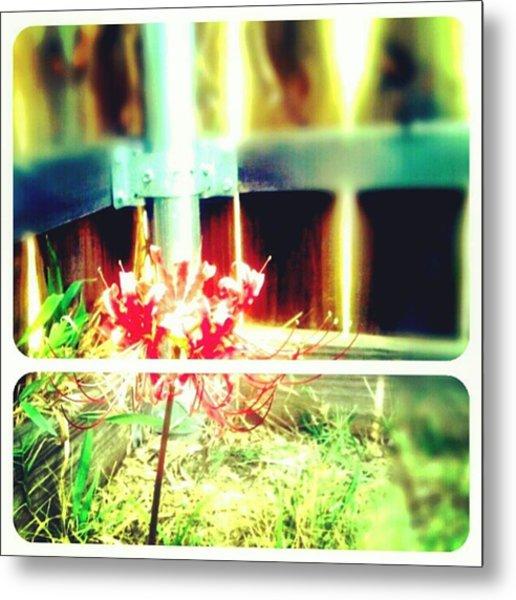 #picframe #nature #random Metal Print by Kel Hill