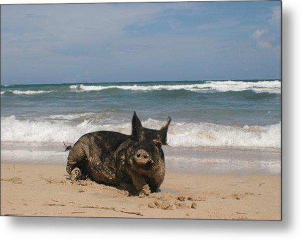 Pig In Paradise Metal Print