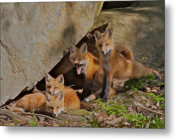Pile Of Pups Metal Print