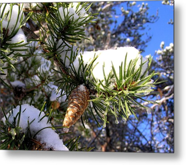Pine Cone In Winter Metal Print