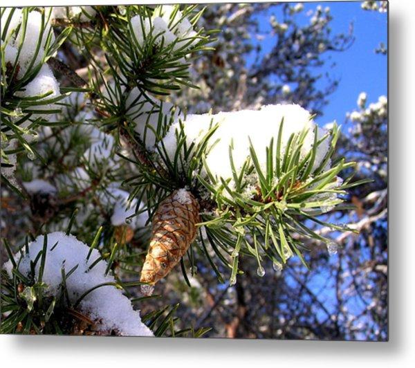 Pine Cone In Winter Metal Print