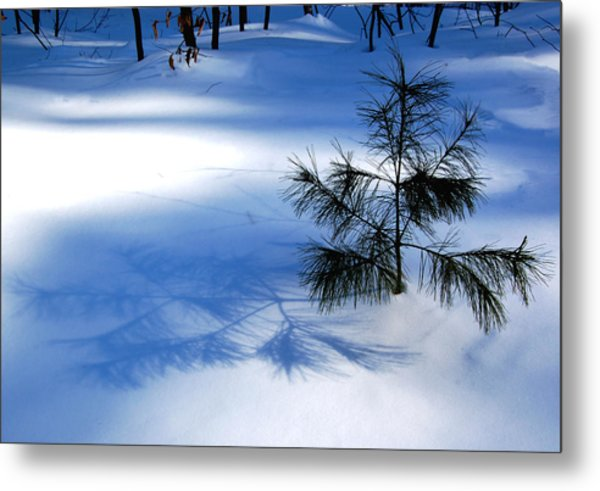 Pine Shadow Metal Print