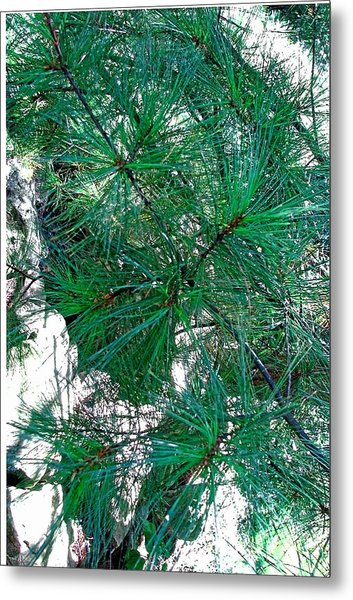Pine With Rocks Metal Print by Suzanne Fenster