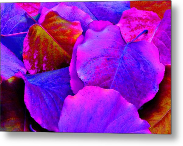 Pink And Purple Leaves Metal Print by Sheila Kay McIntyre
