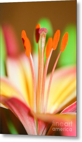 Pink And Yellow Lily 4 Metal Print by Melissa Haley