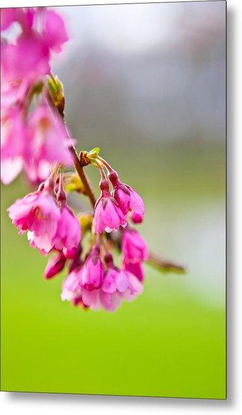 Pink Blossom Metal Print