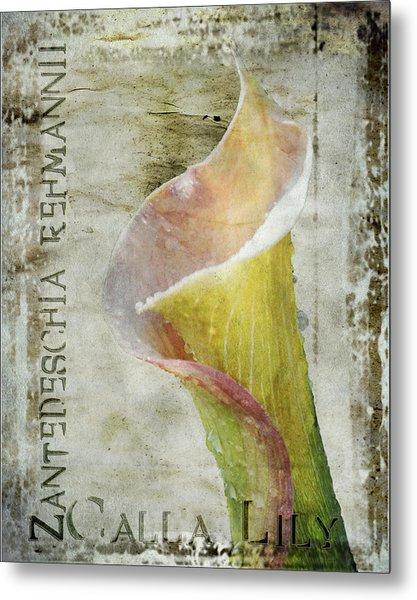 Pink Calla Lily Metal Print