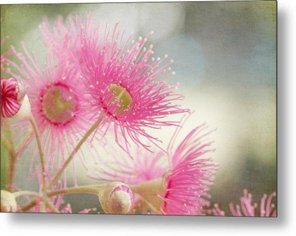 Pink Flowering Metal Print