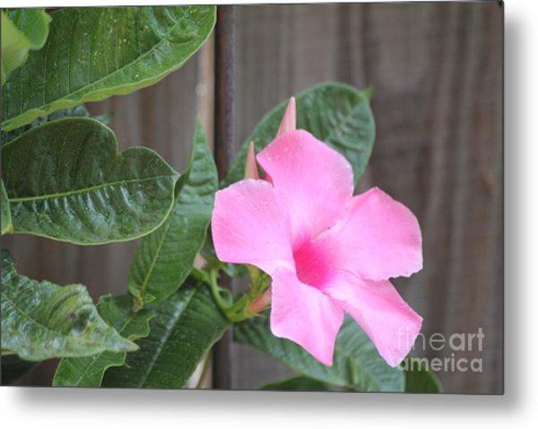 Pink Hibiscus 2 Metal Print