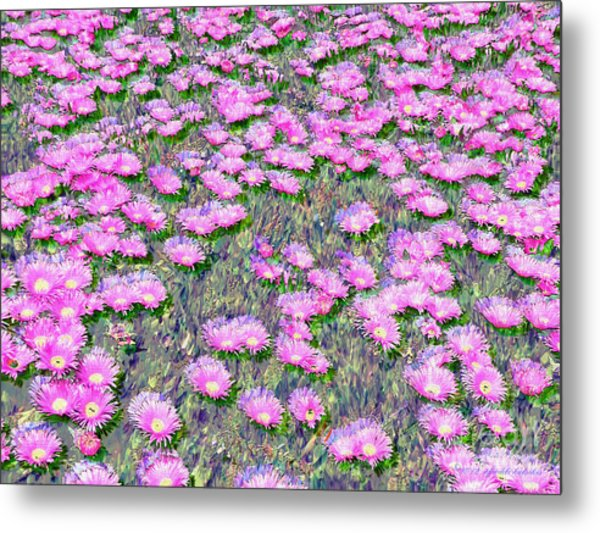 Pink Ice Plant Flowers Metal Print