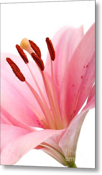Pink Lilies 02 Metal Print