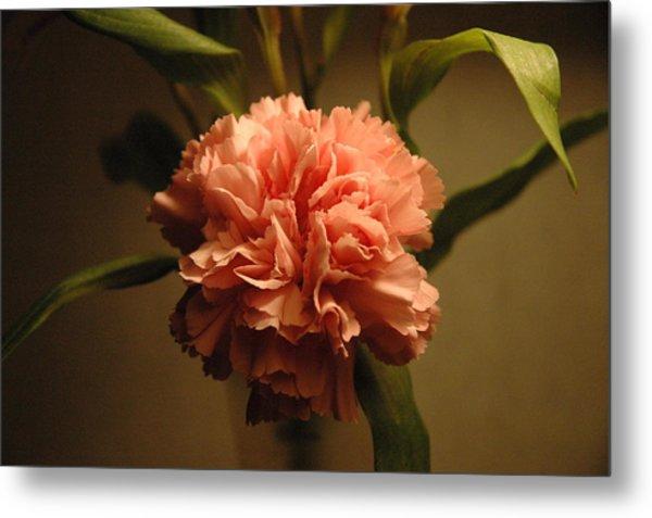 Pink Marigold Flower Metal Print by Rafael Figueroa