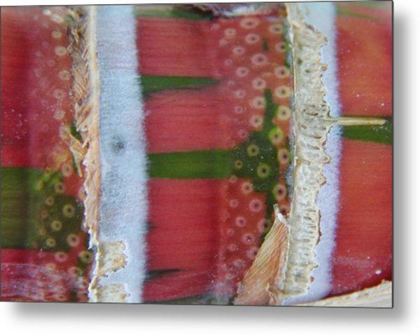 Pink Sugarcane 3 Metal Print
