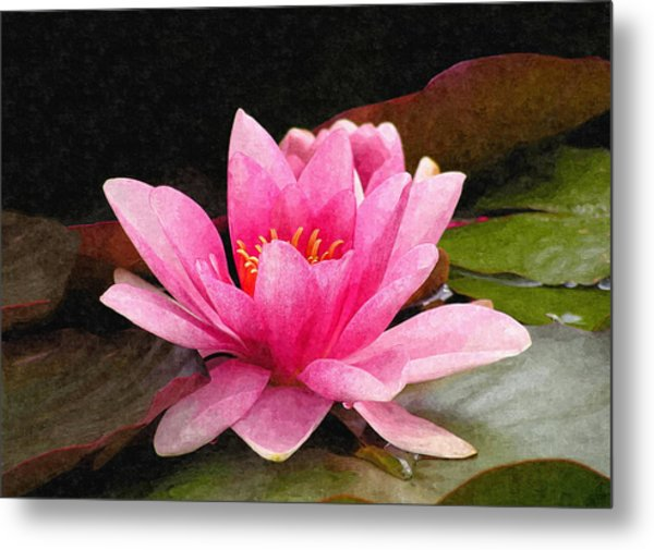 Pink Water Lily Metal Print by Design Windmill