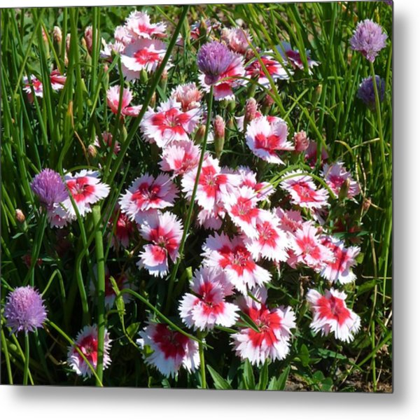 Pinks In The Clover Grass Metal Print by Jeanette Oberholtzer