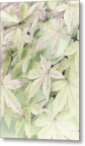 Pistachio Maple Metal Print by David Lade