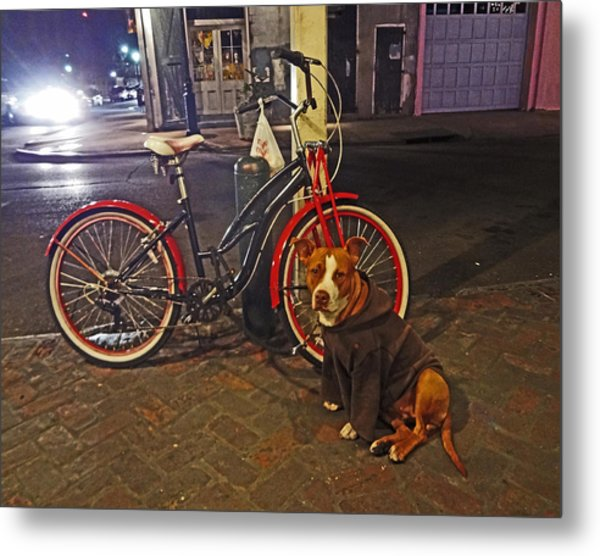 Pit Bull In A Hoodie In The French Quarter Of New Orleans Metal Print