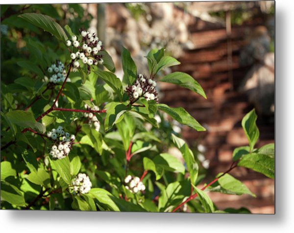 Plants Beside Beaver Creek Villa Metal Print