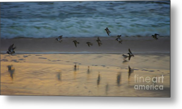 Plovers At Play On A Stormy Morning Metal Print