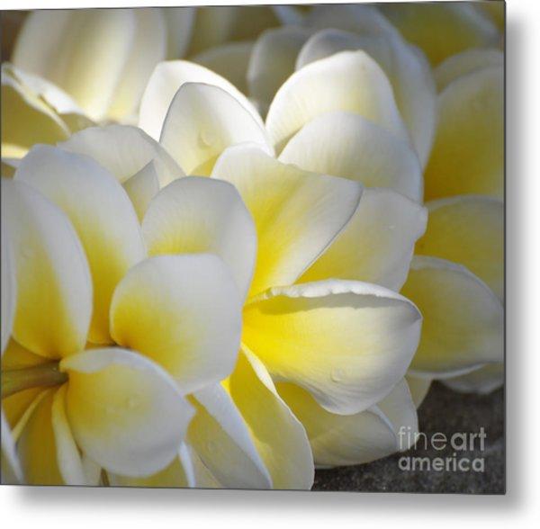 Plumeria Flower Lei Metal Print