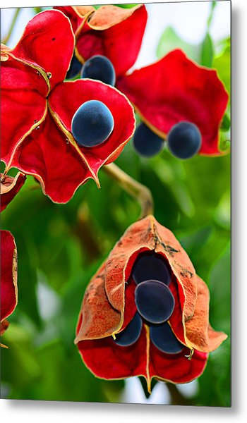 Pods Metal Print by Michelle Armstrong