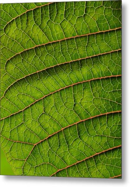 Poinsettia Leaf II Metal Print