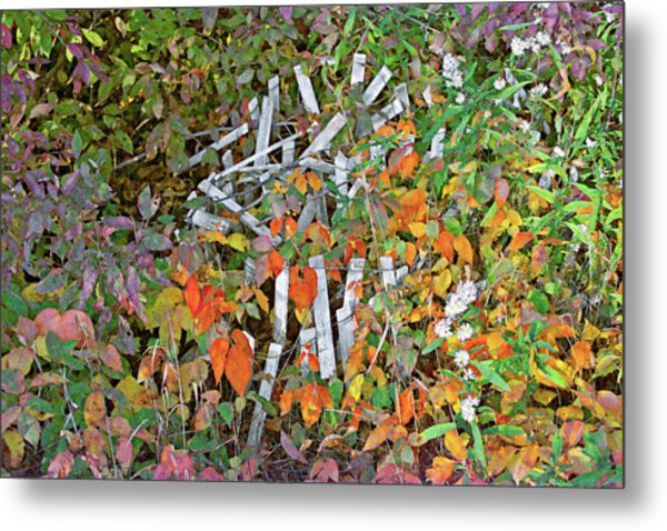 Poison Ivy And Pickets Metal Print
