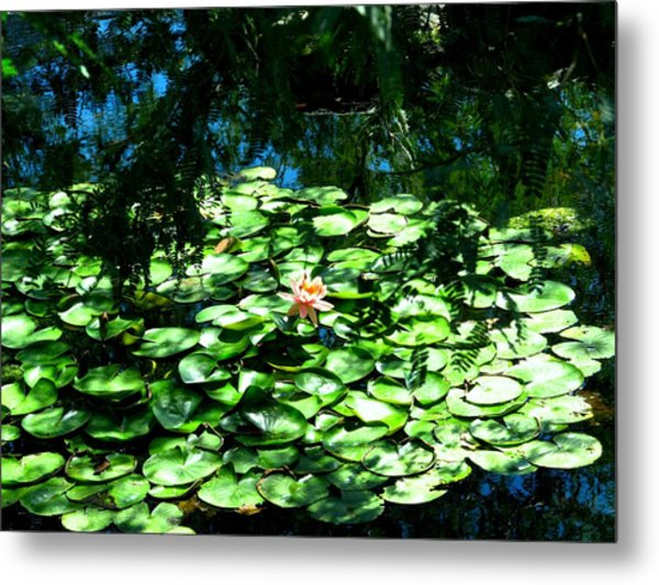 Pond With With Pond Lilly Metal Print by David Killian