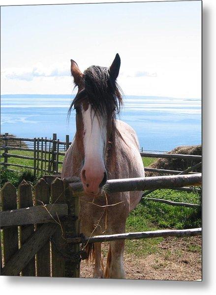 Pony At Highland Village Metal Print